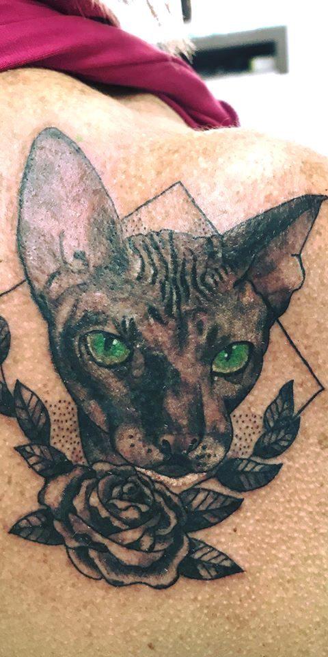 Gato-flor-Fernando
